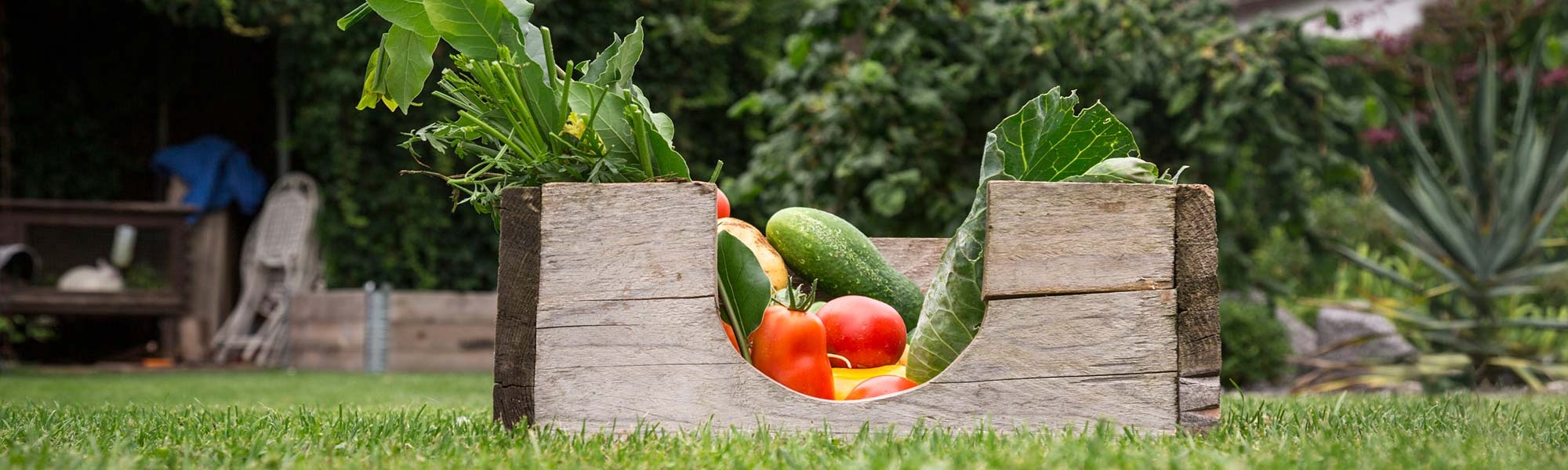 Box of fresh vegetables sitting in yard of green grass